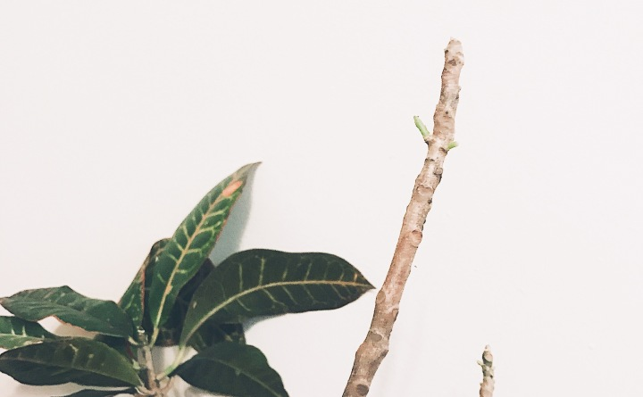 Processed with VSCO with hb1 preset